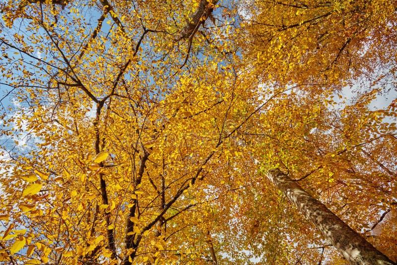Foglie di autunno nella foresta fotografia stock