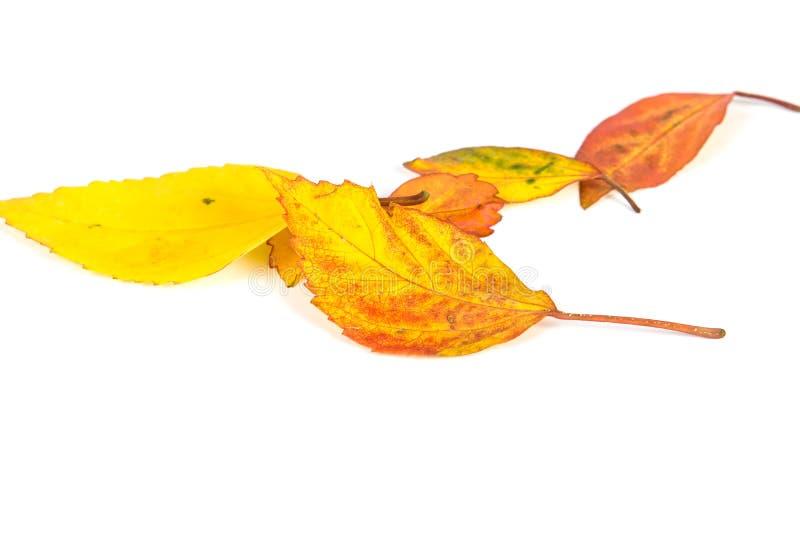 Foglie di autunno secche che cadono giù sul pavimento bianco, fuoco selettivo immagini stock libere da diritti