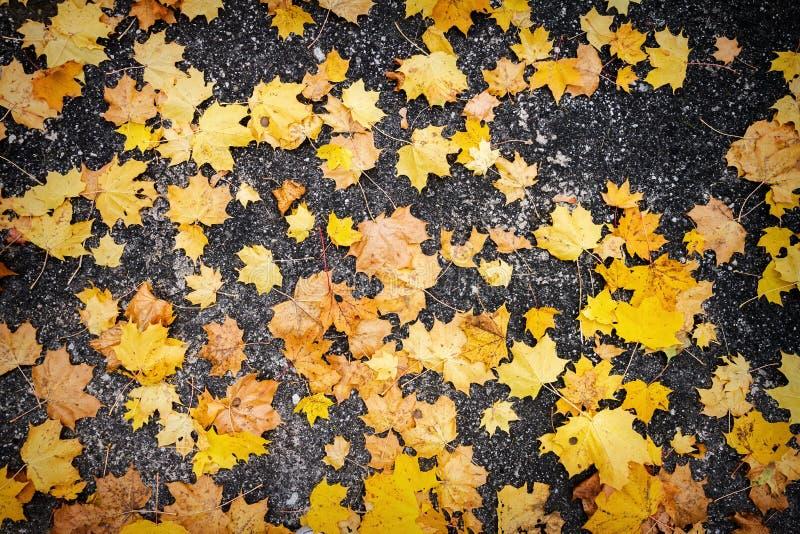 Foglie di autunno su asfalto immagine stock