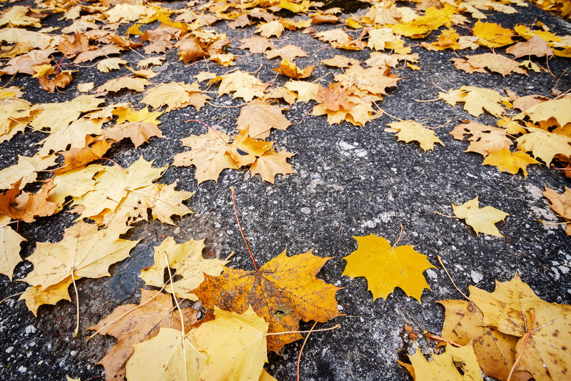 Foglie di autunno su asfalto fotografia stock