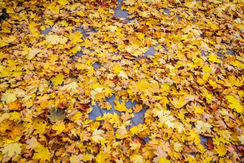 Foglie di autunno su asfalto fotografie stock