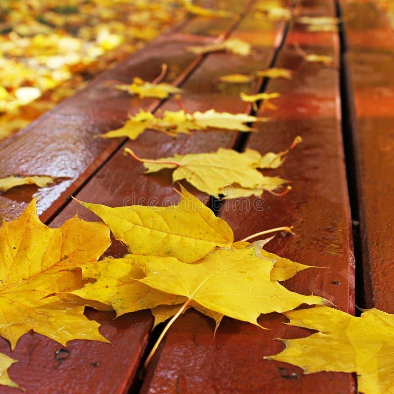Foglie di autunno su un banco nel parco fotografie stock
