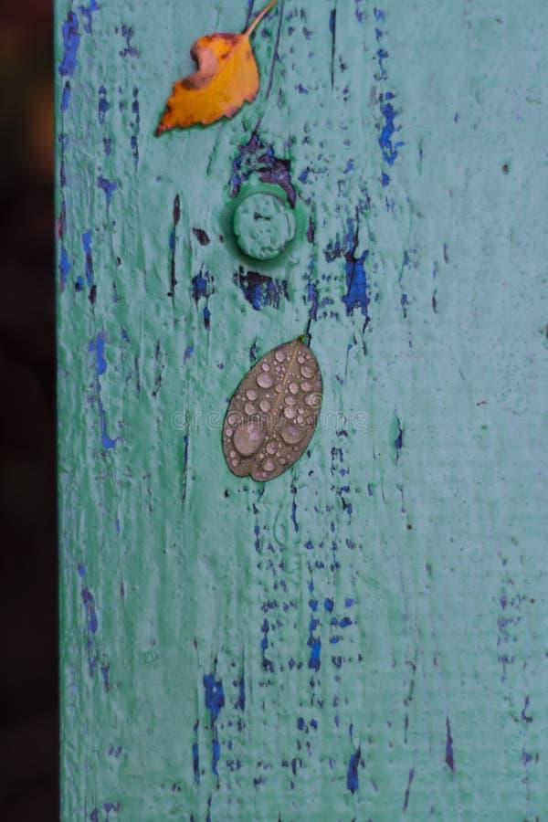 Foglie di autunno su un bordo dipinto Bagni le foglie dopo pioggia Foglie di ottobre e novembre Fondo per le foto Gocce di acqua fotografie stock