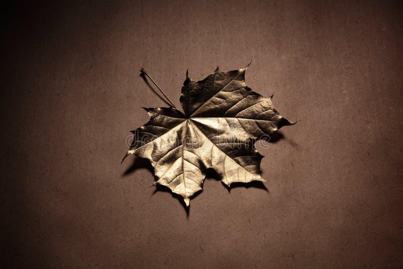 Foglie di autunno su una vecchia carta immagini stock