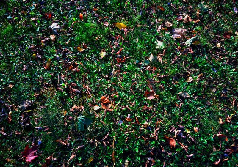 Foglie di autunno sul fondo verde di struttura del prato inglese fotografia stock libera da diritti