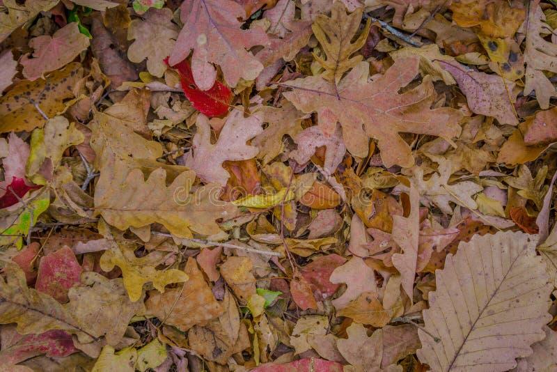 Foglie di autunno sul pavimento della foresta immagine stock