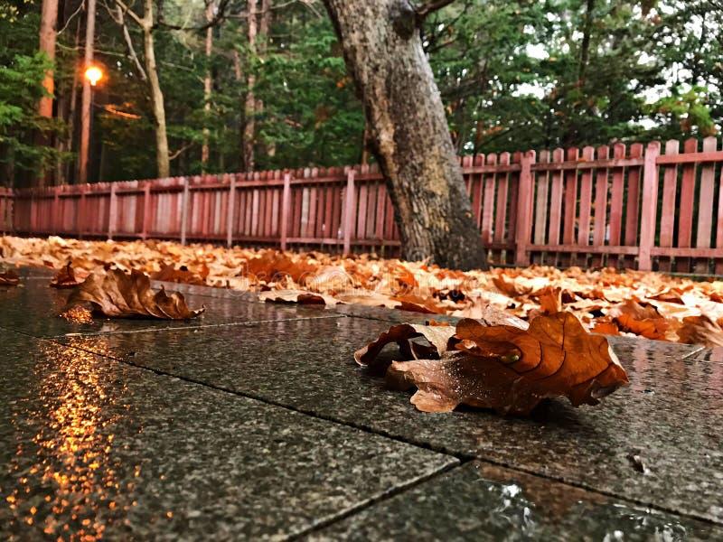 Foglie di autunno sul pavimento di marmo immagine stock