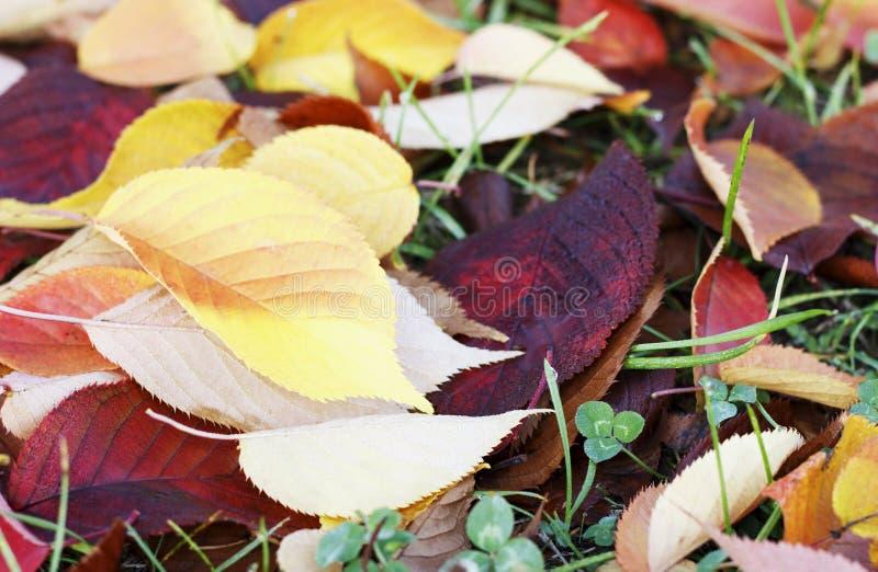 Foglie di autunno sull'erba, fondo di autunno fotografia stock libera da diritti
