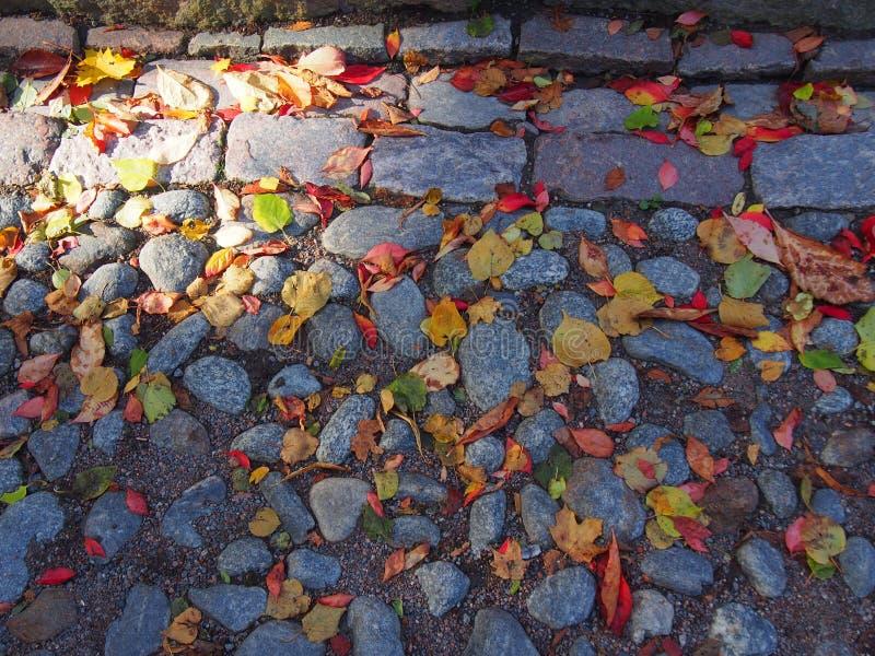 Foglie di autunno sulla pavimentazione, Suomelinna Finlandia immagini stock libere da diritti