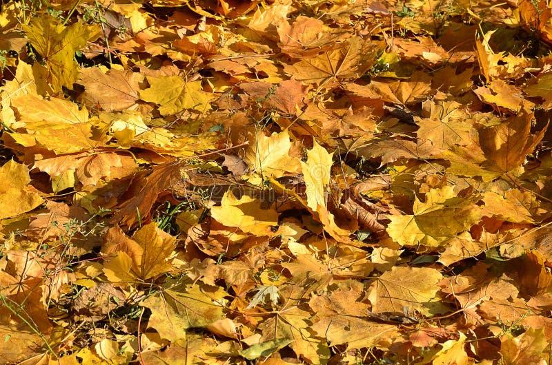 Foglie di autunno sulla terra immagini stock