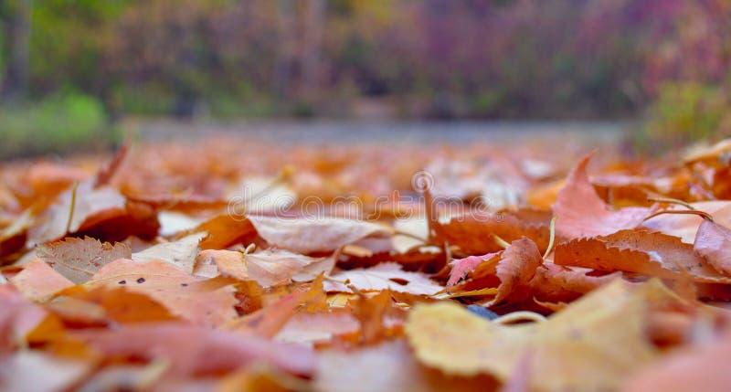 Foglie di autunno sulla terra fotografie stock