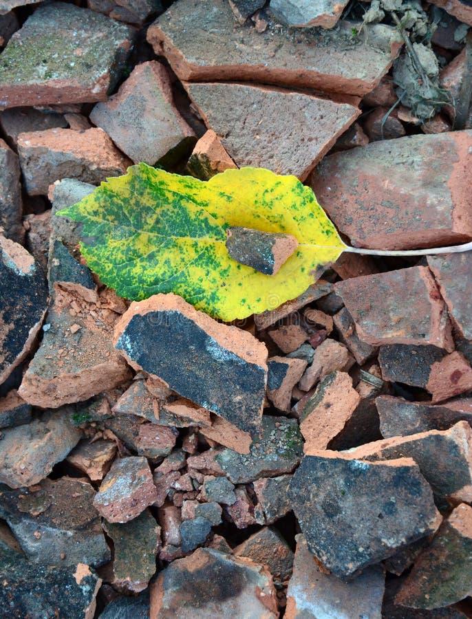 foglie di autunno sulle mattonelle di tetto rotte fotografia stock