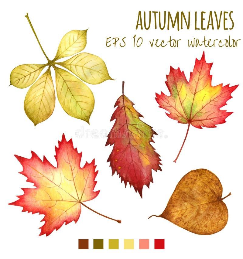 Foglie di autunno un colore di acqua su un fondo bianco royalty illustrazione gratis