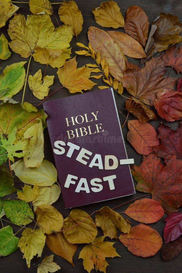 Foglie di autunno variabili con la bibbia e la parola steadfast fotografie stock libere da diritti