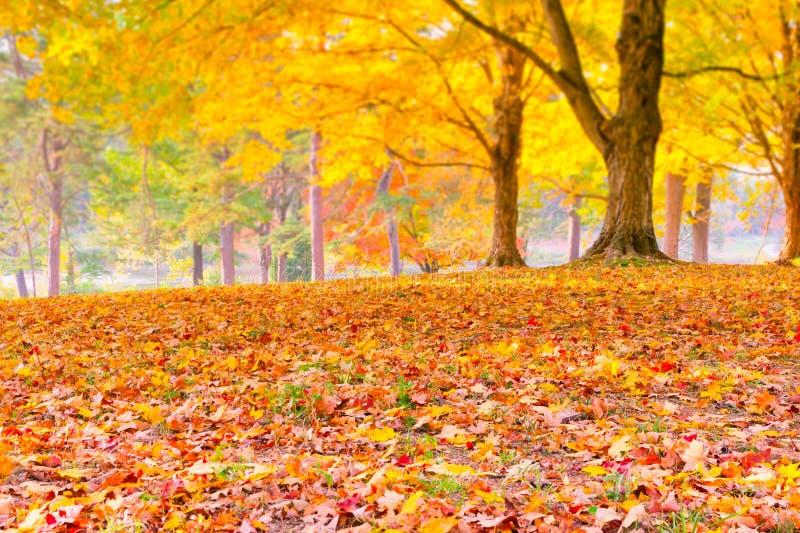Foglie di autunno variopinte con fondo vago foresta. fotografia stock libera da diritti