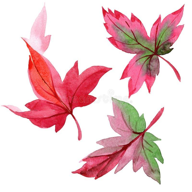 Foglie di autunno variopinte dell'acquerello Fogliame floreale del giardino botanico della pianta della foglia Elemento isolato d illustrazione vettoriale