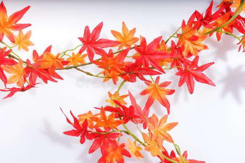Foglie di autunno variopinte isolate su bianco fotografie stock