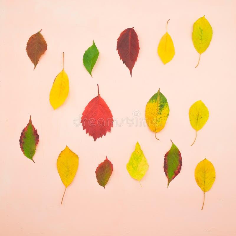 Foglie di autunno variopinte isolate su fondo beige immagini stock