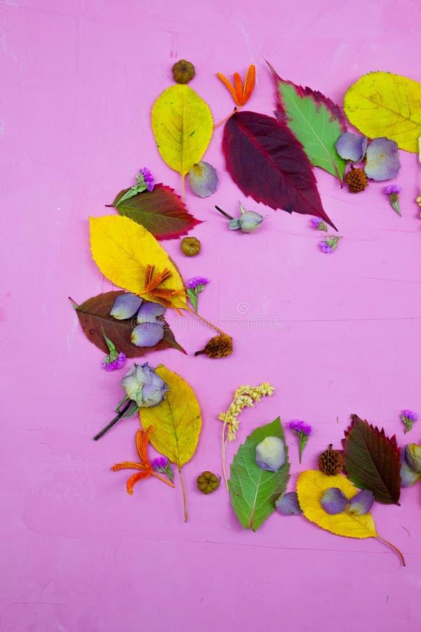 Foglie di autunno variopinte isolate su fondo porpora immagine stock libera da diritti