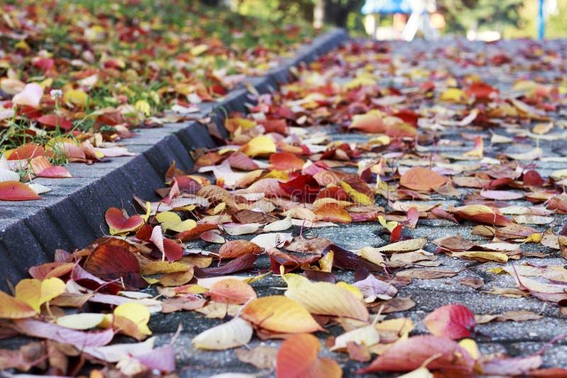 Foglie di autunno variopinte sulla pavimentazione, fondo di autunno fotografia stock