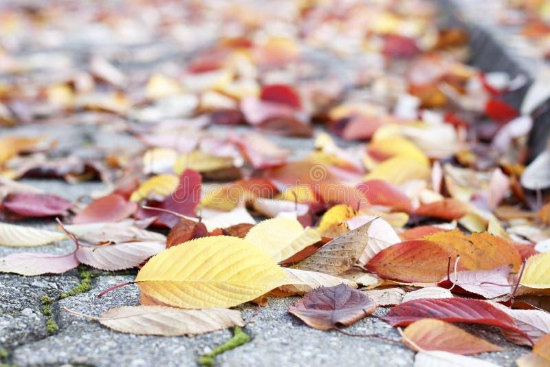 Foglie di autunno variopinte sulla pavimentazione, fondo di autunno fotografie stock libere da diritti