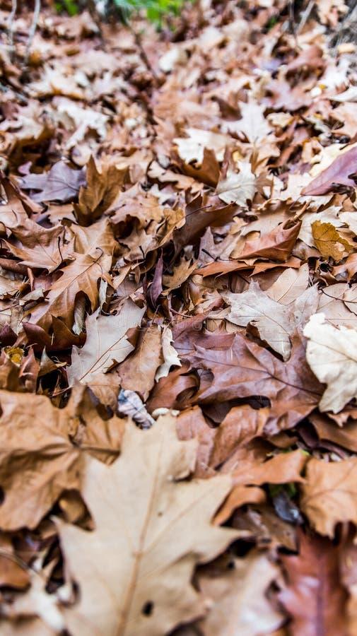 Foglie di autunno - verticali fotografia stock libera da diritti