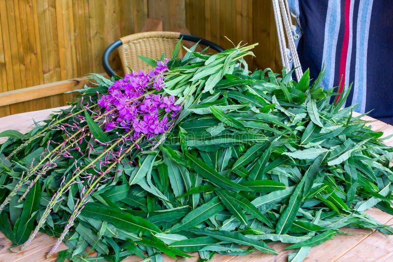 Foglie di battuta e fiori di fioritura - materie prime per rendere il tè russo tradizionale di Koporsky anche noto come Ivan Tea immagini stock