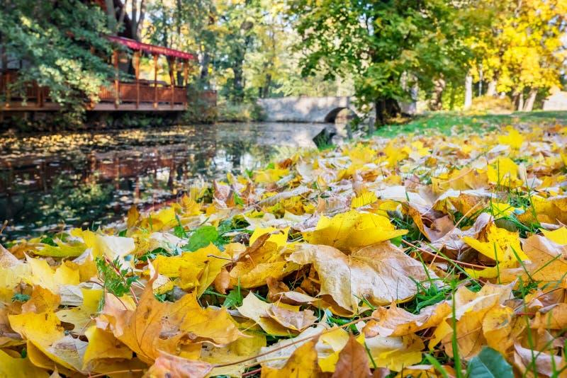 Foglie di caduta in autunno fotografia stock libera da diritti