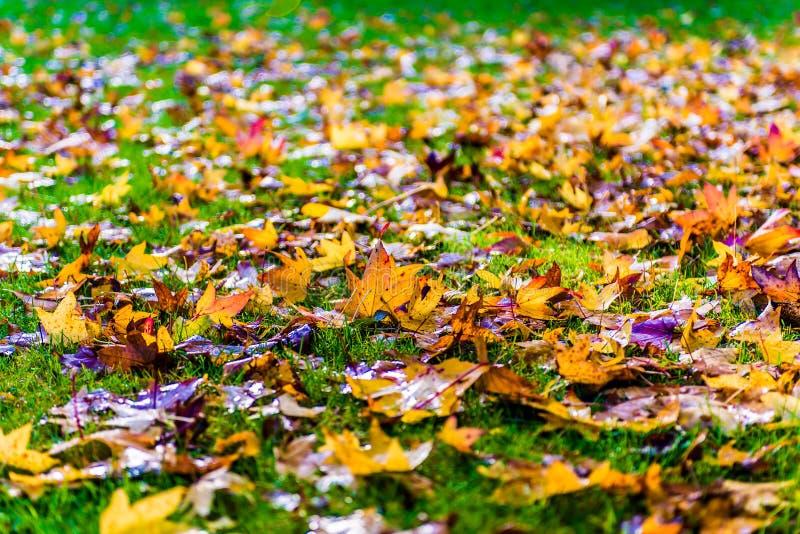 Foglie di caduta di autunno su erba immagini stock libere da diritti