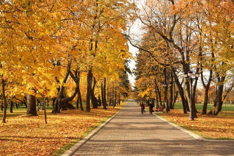 Foglie di giallo di autunno nel parco fotografie stock
