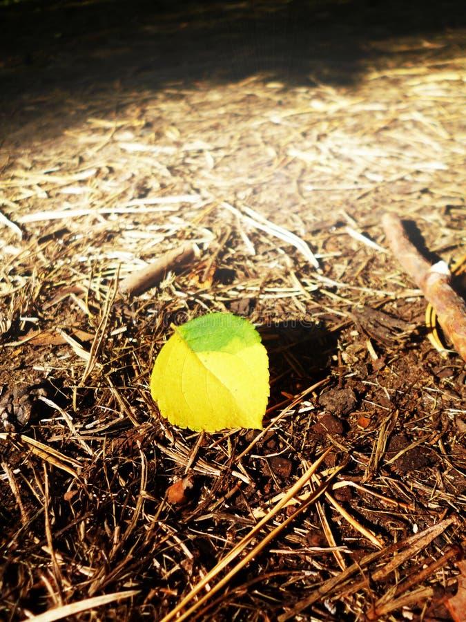 Foglie di giallo di autunno sulla terra immagini stock libere da diritti