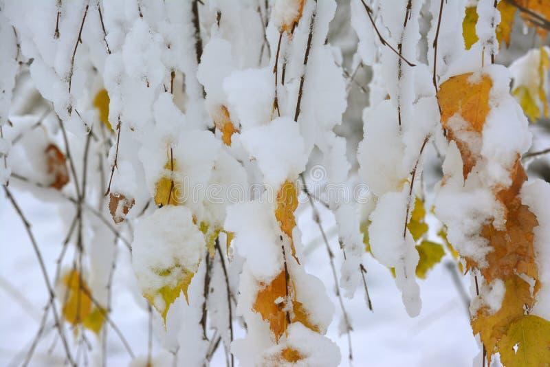Foglie di giallo nella neve fotografia stock libera da diritti