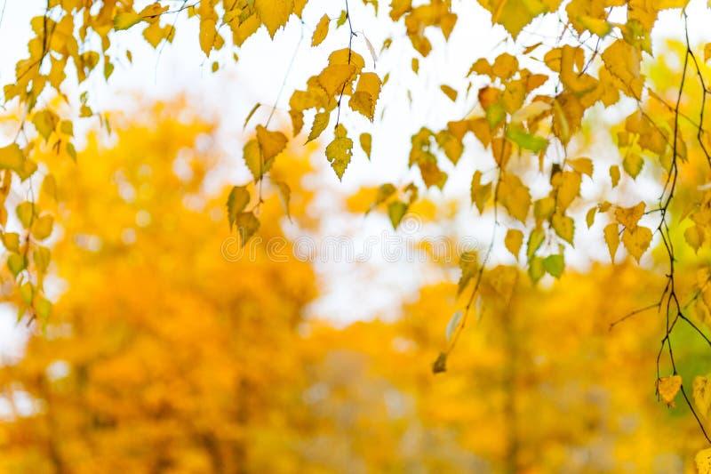 Foglie di giallo su un ramo immagini stock libere da diritti