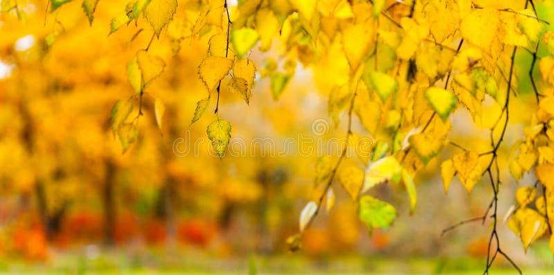 Foglie di giallo su un ramo fotografia stock libera da diritti