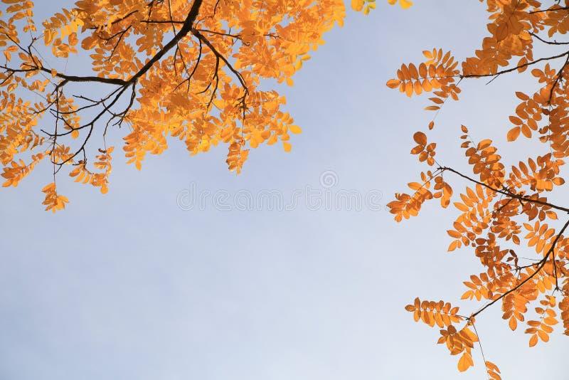 Foglie di giallo un giorno soleggiato di autunno immagine stock