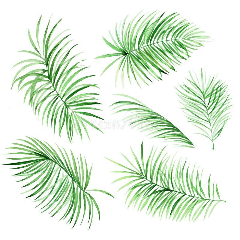 Foglie di palma dell'acquerello royalty illustrazione gratis