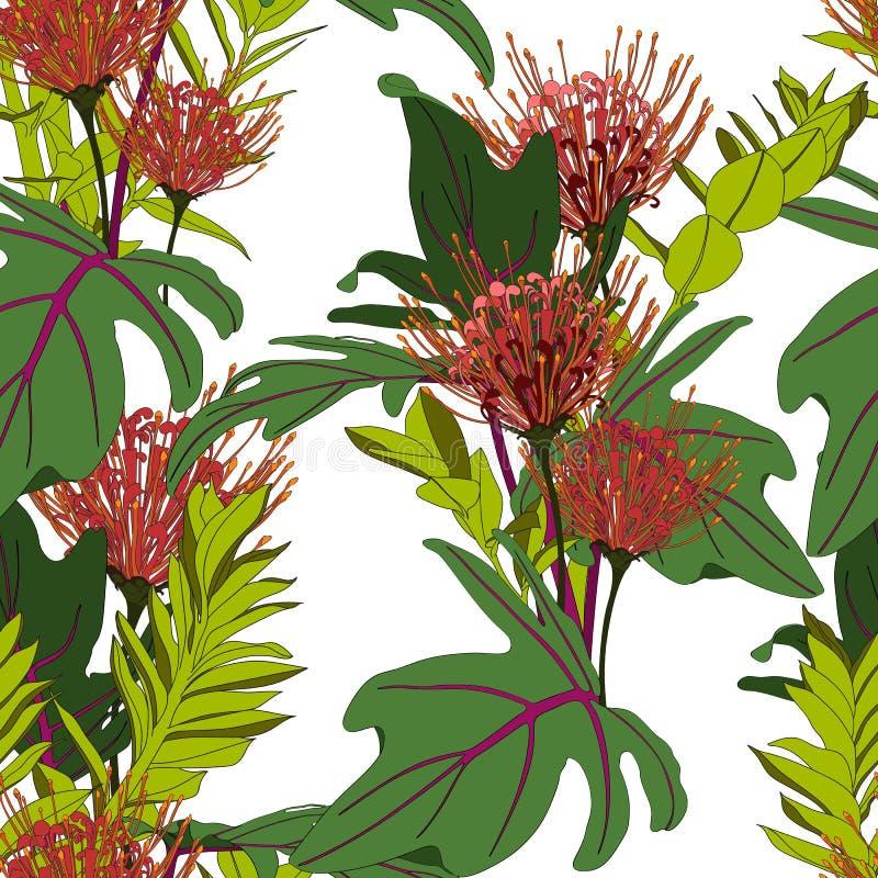 Foglie di palma e fiori tropicali verdi esotici del protea, fondo bianco illustrazione vettoriale
