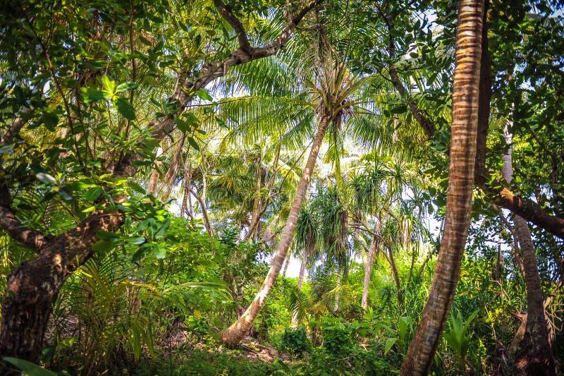 Foglie di palma foresta tropicale sull 39 isola in oceano for Pianta della foresta di pioppo