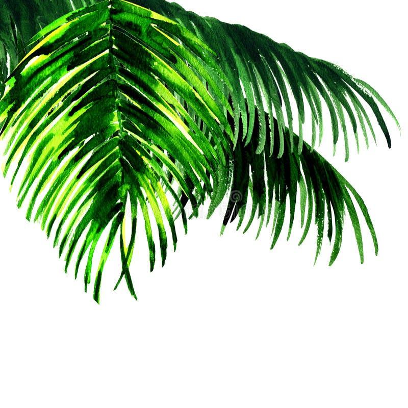 Foglie di palma isolate su bianco illustrazione di stock