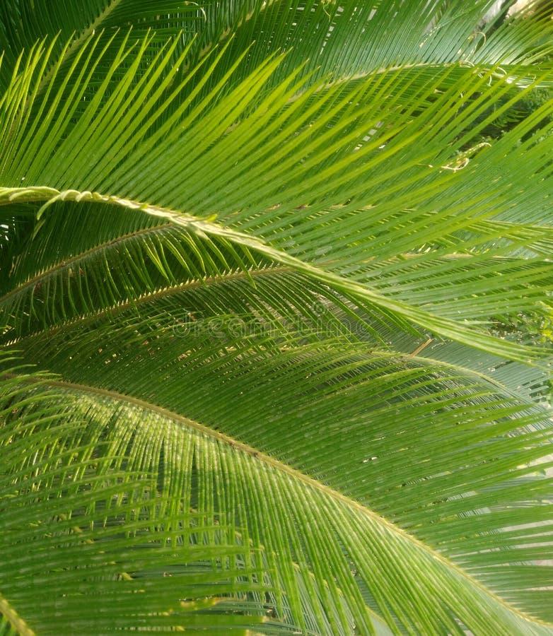 Foglie di palma nell'estate fotografia stock libera da diritti