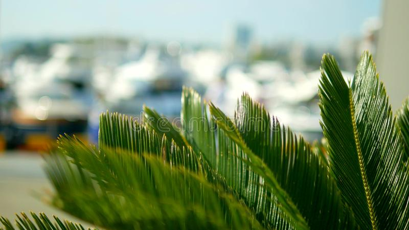 Foglie di palma su fondo vago porto marittimo con gli alberi bianchi degli yacht e delle navi in mare fotografie stock libere da diritti