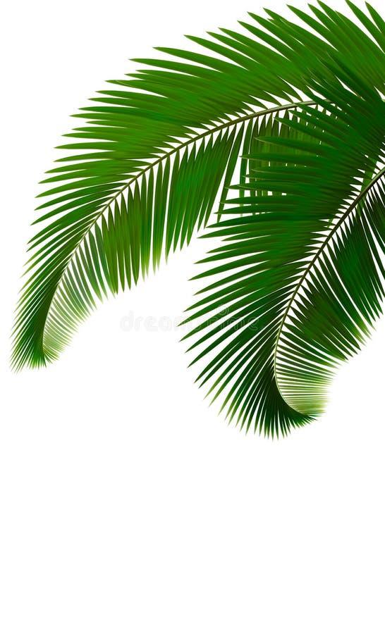 Foglie di palma su priorità bassa bianca illustrazione vettoriale
