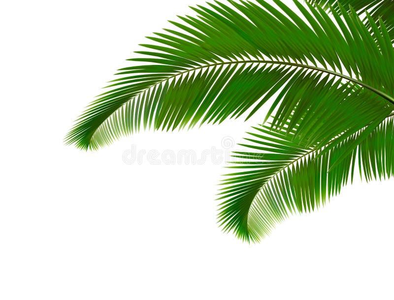 Foglie di palma su priorità bassa bianca illustrazione di stock