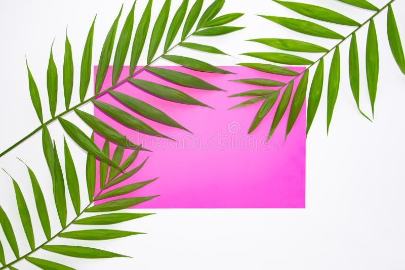 Foglie di palma tropicali su un fondo rosa Concetto minimo di estate Disposizione piana con lo spazio della copia Strato di verde fotografie stock