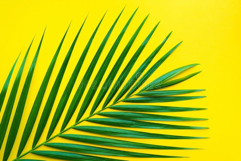 Foglie di palma tropicali sul fondo di colore pastello Foglia della giungla fotografia stock