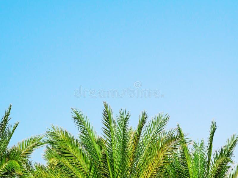 Foglie di palma verdi su fondo blu Vacanza di estate e concetto tropicali di turismo Concetto minimalista Disposizione piana, vis immagini stock libere da diritti