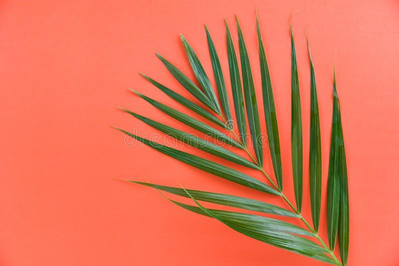 Foglie di palma verdi sulla foglia di palma arancio del betel di vista superiore del fondo fotografia stock