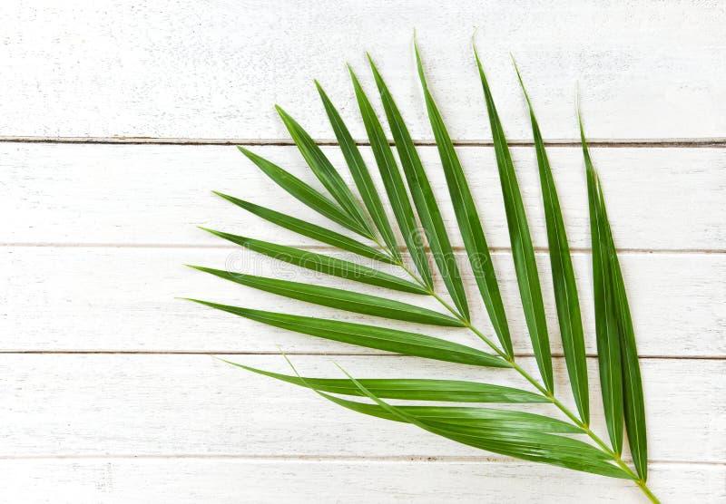 Foglie di palma verdi sulla vista superiore del fondo di legno bianco/foglia di palma del betel fotografia stock