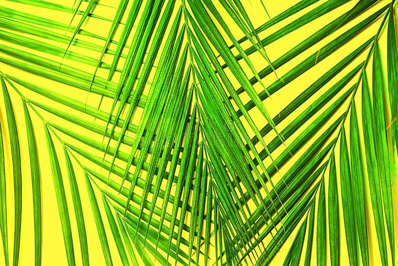 Foglie di palma verdi tropicali su fondo giallo Isolato fotografie stock
