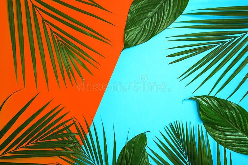 Foglie di palma verdi tropicali su fondo variopinto Colori di corallo e blu arancio luminosi immagini stock